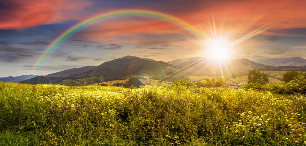 35716284 - composite mountain landscape. wild flowers on meadow in mountains in sunset light with rainbow